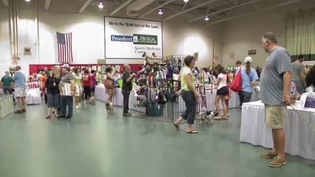 News video: Pug Life on Display at Wisconsin Festival